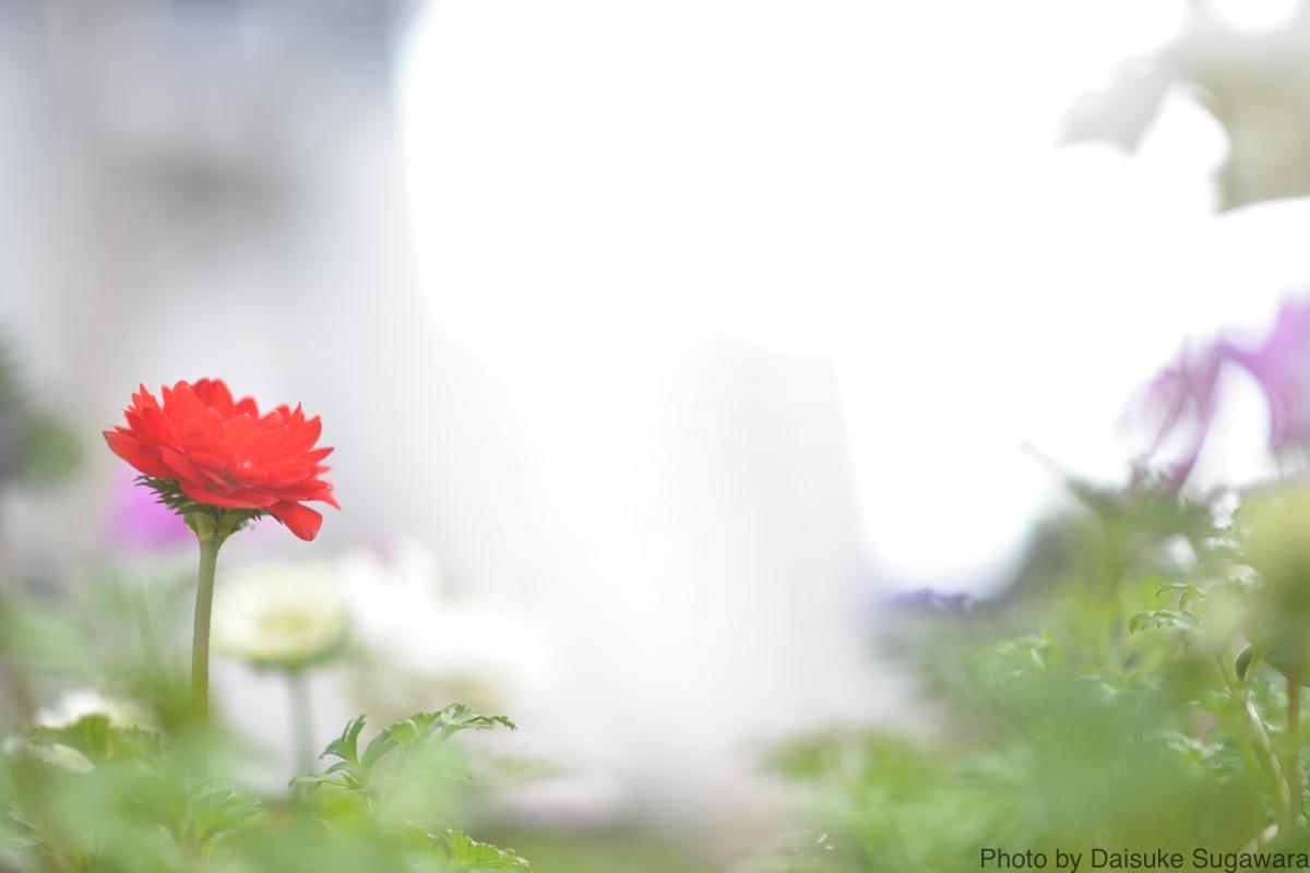 花と後ボケ