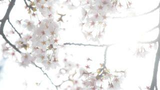 春に撮りたい宮城の風景6選