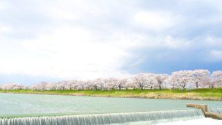 「さくら名所100選」の白石川堤一目千本桜に行ってきた【2017年・開花状況もレポートします!】